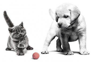 توله-سگ-بچه-گربه