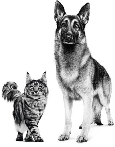 سگ-و-گربه